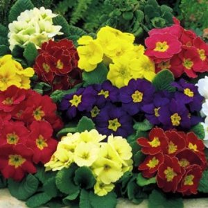 what are some pretty shade loving flowers  dpetalssingapore, Beautiful flower