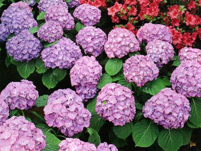 DpetalsSingapore - WordPress.com & What are some pretty shade loving flowers | DpetalsSingapore